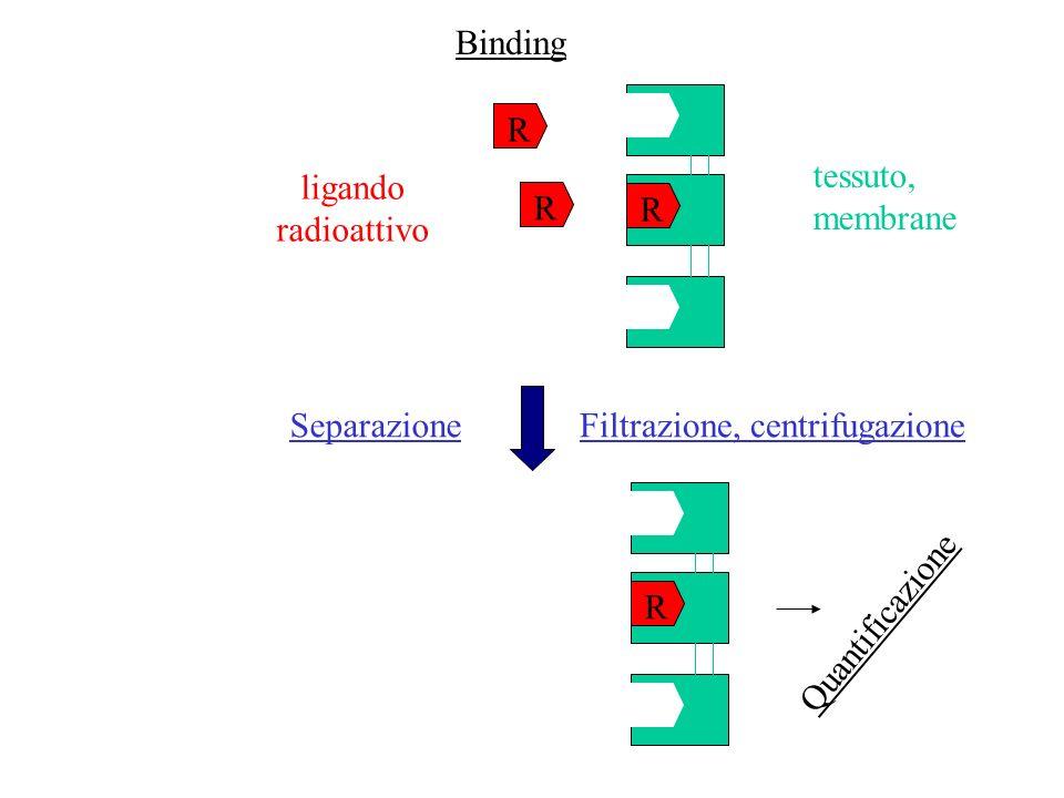 Binding R. tessuto, membrane. ligando. radioattivo. R. R. Separazione. Filtrazione, centrifugazione.