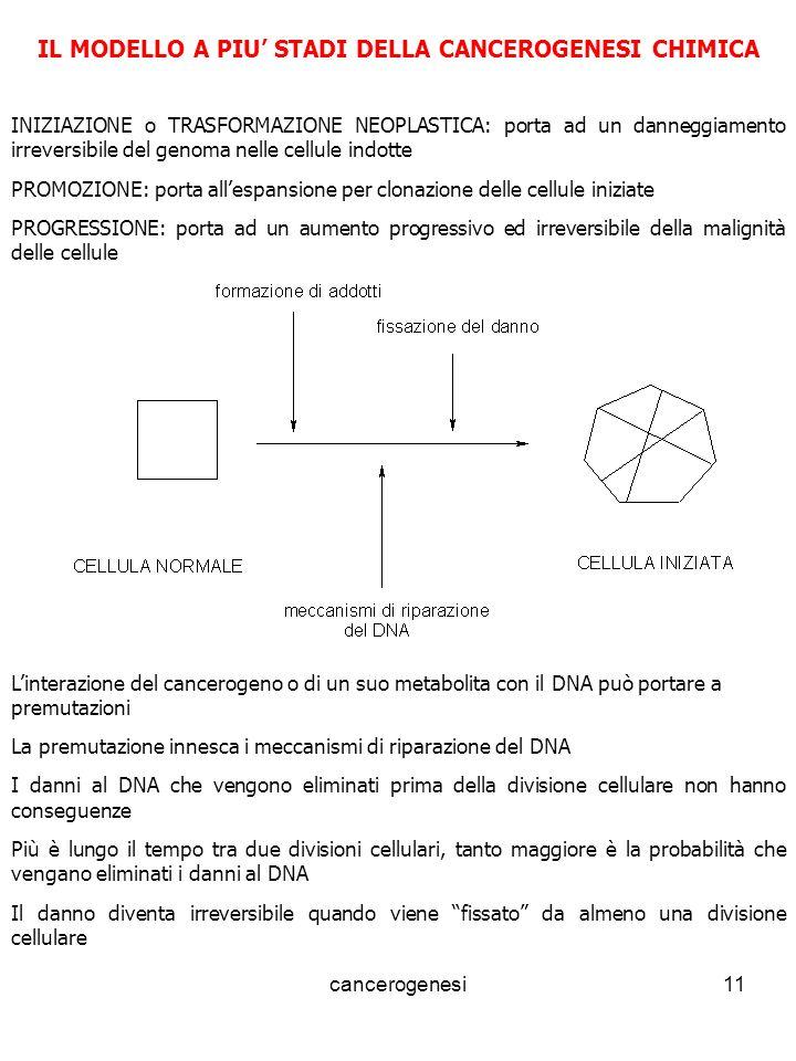 IL MODELLO A PIU' STADI DELLA CANCEROGENESI CHIMICA