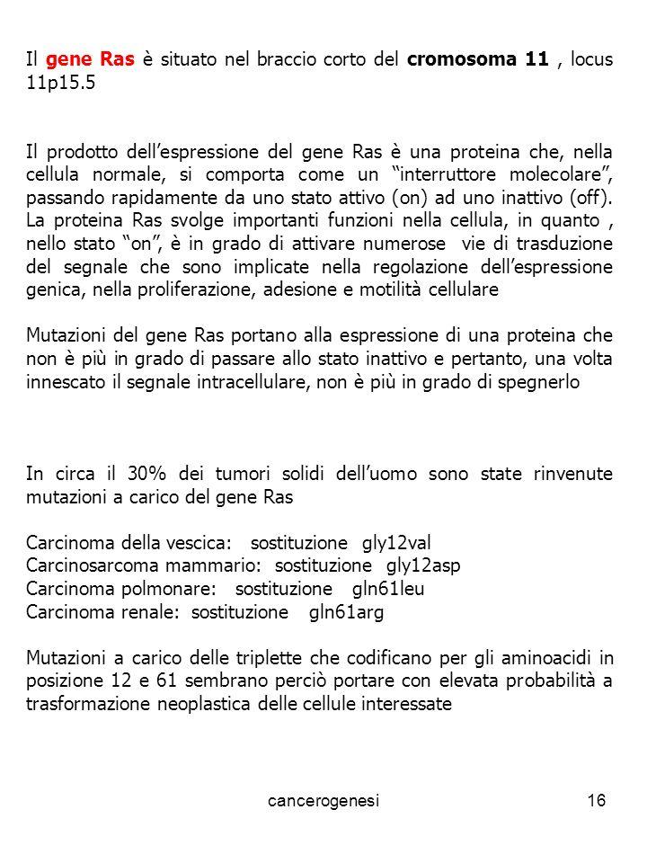 Carcinoma della vescica: sostituzione gly12val