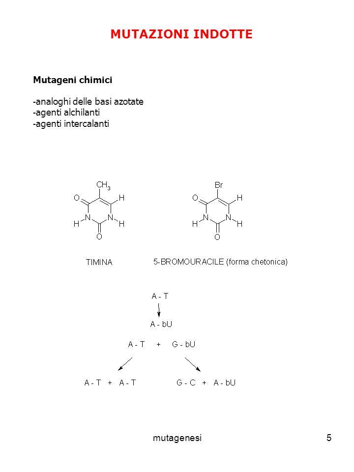 MUTAZIONI INDOTTE Mutageni chimici analoghi delle basi azotate