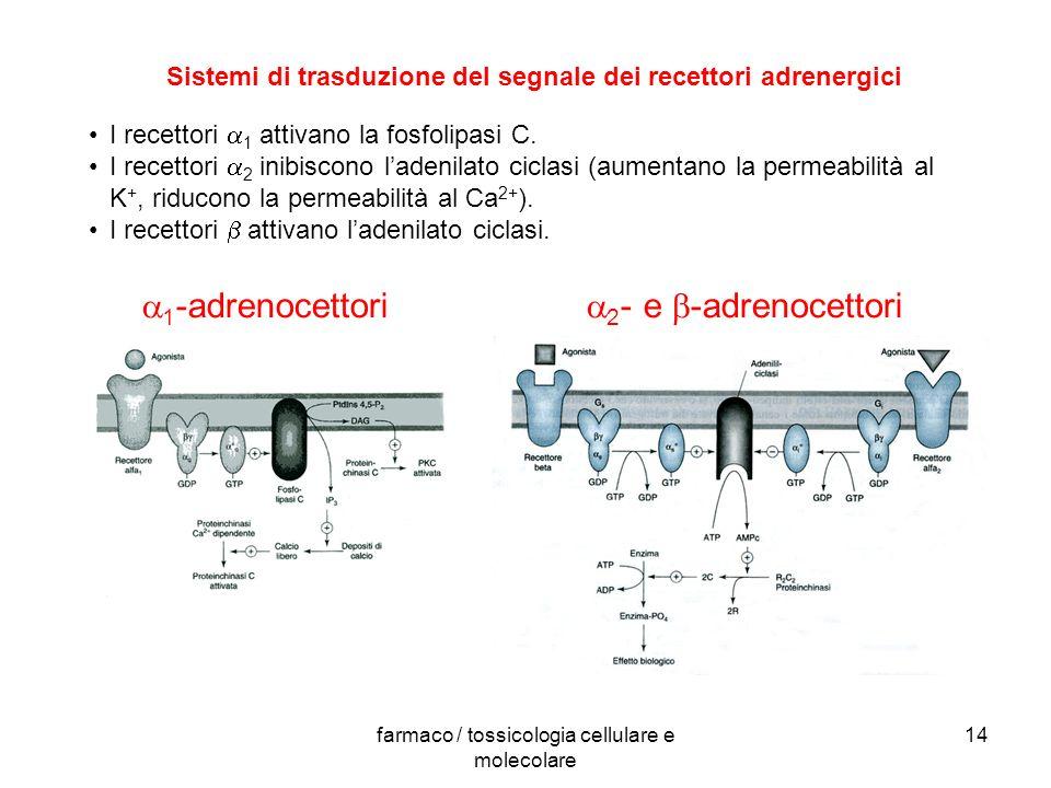Sistemi di trasduzione del segnale dei recettori adrenergici