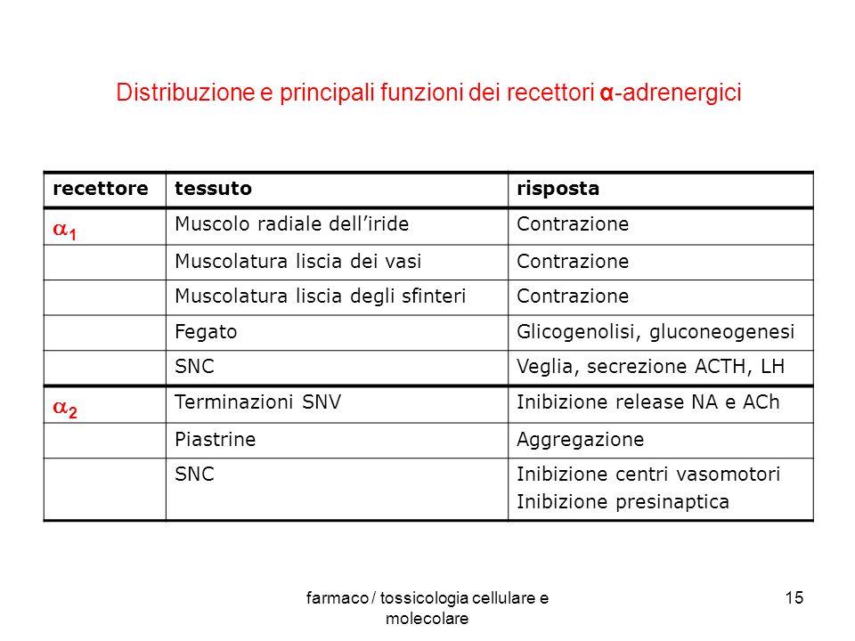 Distribuzione e principali funzioni dei recettori α-adrenergici