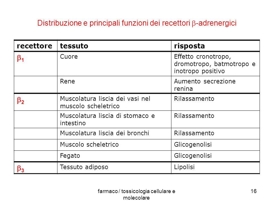 Distribuzione e principali funzioni dei recettori b-adrenergici