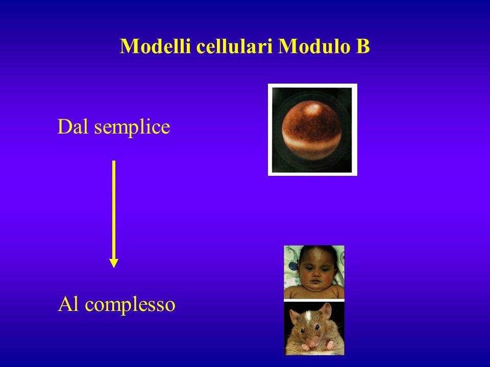 Modelli cellulari Modulo B