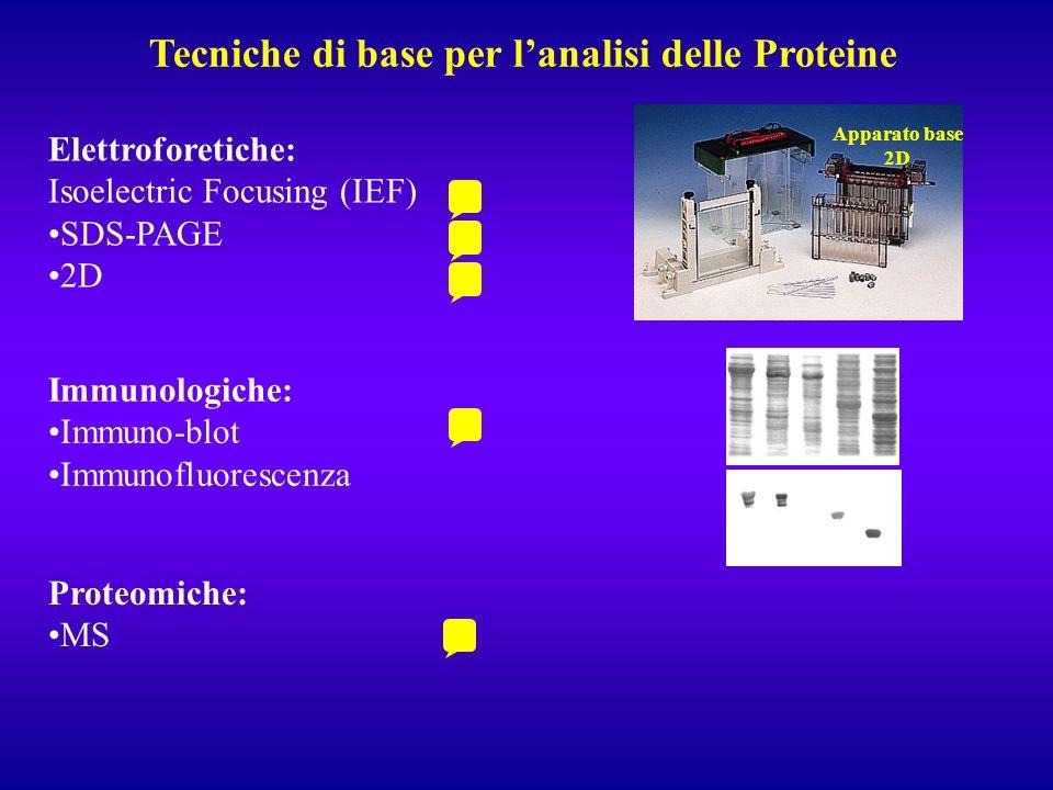 Tecniche di base per l'analisi delle Proteine