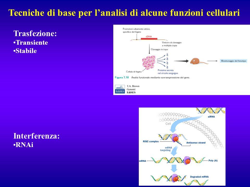 Tecniche di base per l'analisi di alcune funzioni cellulari