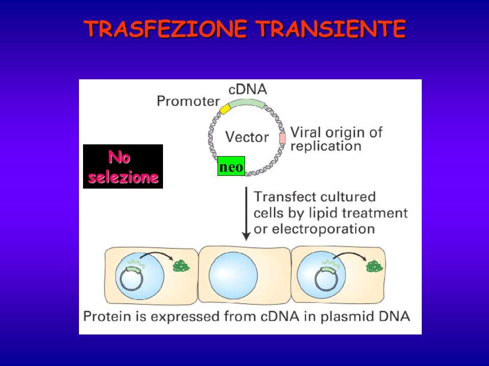 TRASFEZIONE TRANSIENTE
