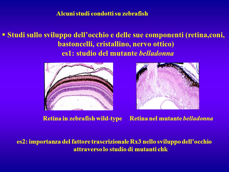 Studi sullo sviluppo dell'occhio e delle sue componenti (retina,coni,
