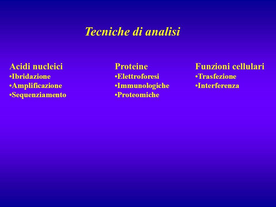 Tecniche di analisi Acidi nucleici Proteine Funzioni cellulari