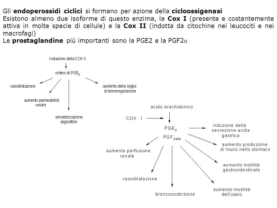 Gli endoperossidi ciclici si formano per azione della cicloossigenasi