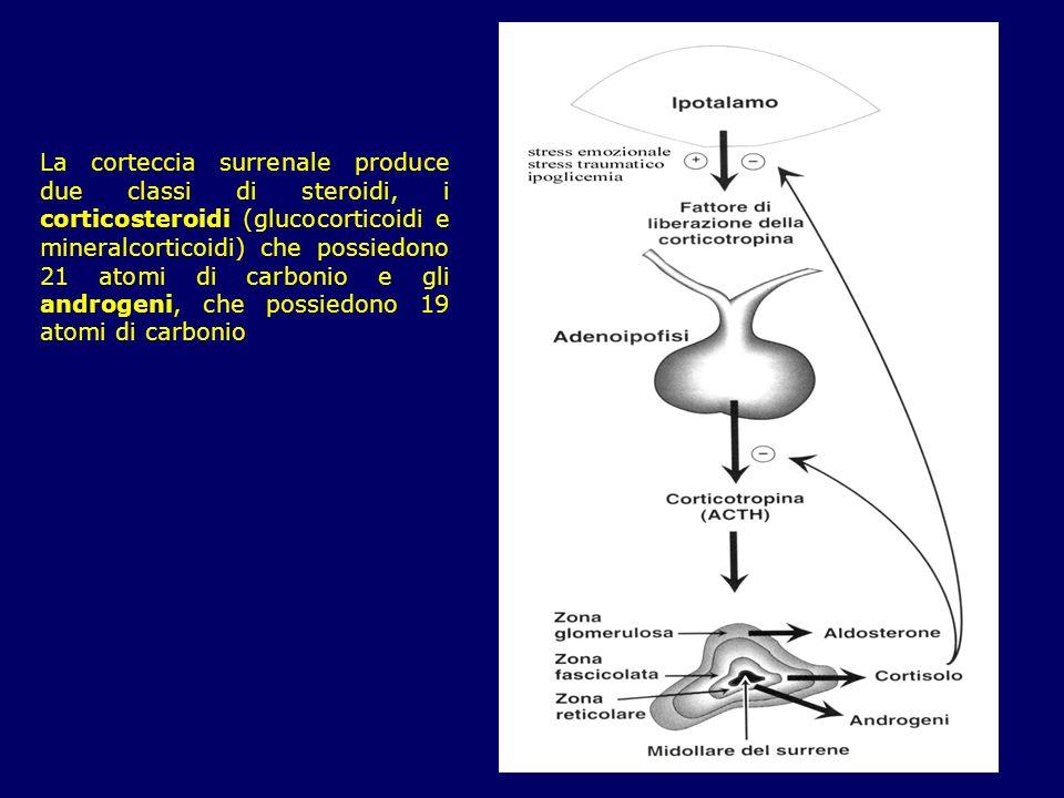 La corteccia surrenale produce due classi di steroidi, i corticosteroidi (glucocorticoidi e mineralcorticoidi) che possiedono 21 atomi di carbonio e gli androgeni, che possiedono 19 atomi di carbonio