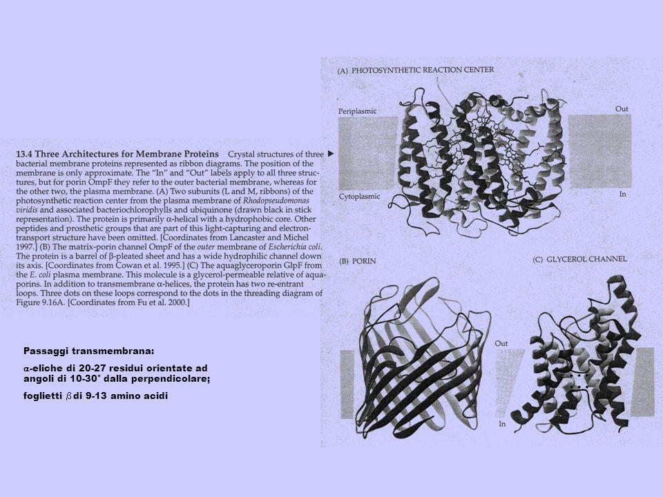 Passaggi transmembrana: