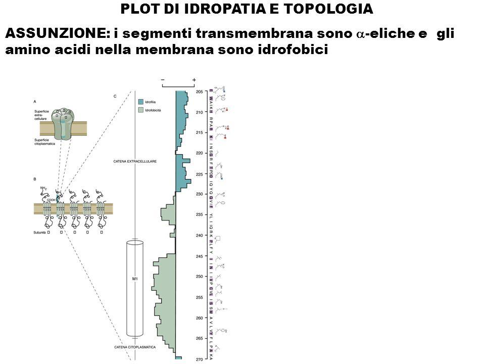 PLOT DI IDROPATIA E TOPOLOGIA
