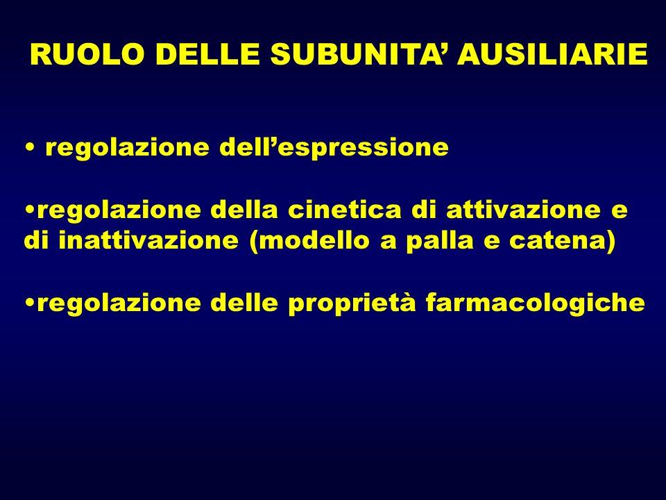 RUOLO DELLE SUBUNITA' AUSILIARIE
