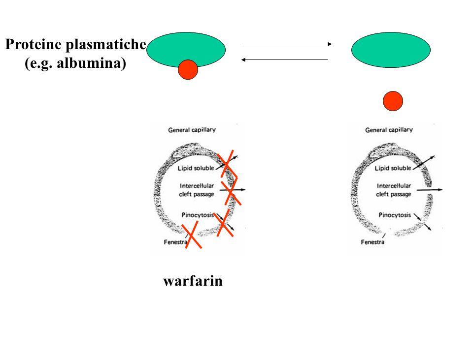 Proteine plasmatiche (e.g. albumina) warfarin