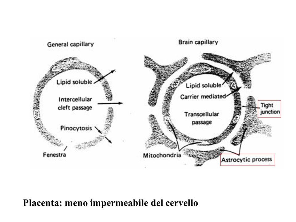 Placenta: meno impermeabile del cervello