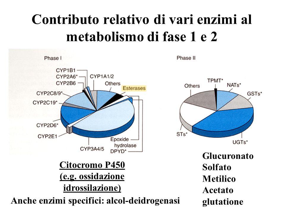 Contributo relativo di vari enzimi al metabolismo di fase 1 e 2