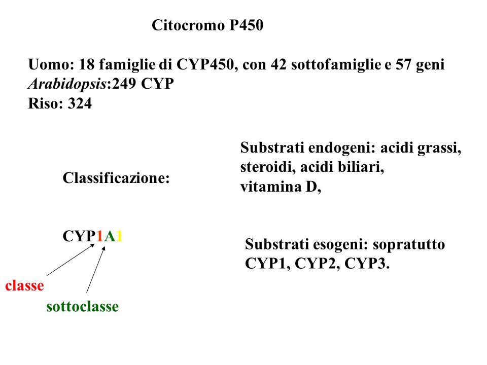 Citocromo P450 Uomo: 18 famiglie di CYP450, con 42 sottofamiglie e 57 geni. Arabidopsis:249 CYP. Riso: 324.
