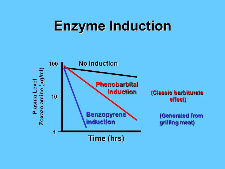 Enzyme Induction Time (hrs) No induction Phenobarbital induction