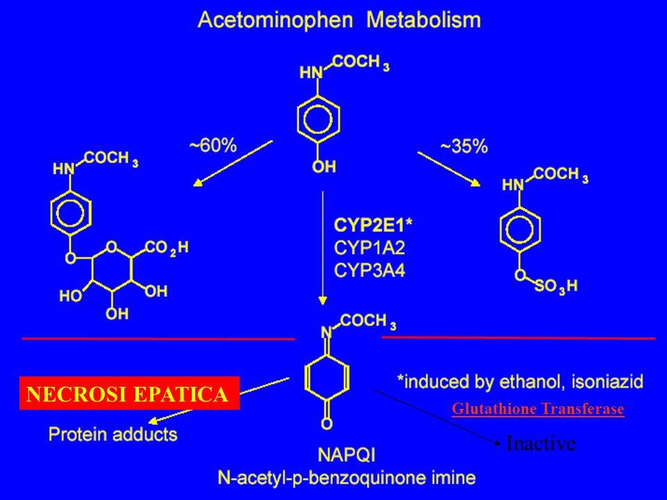 NECROSI EPATICA Glutathione Transferase Inactive