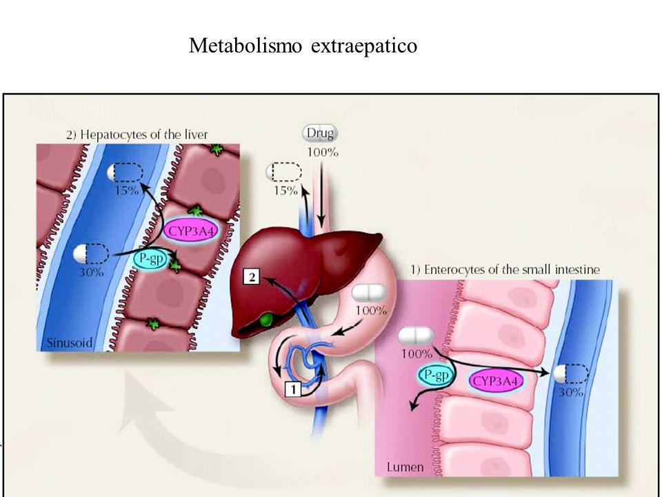 Metabolismo extraepatico