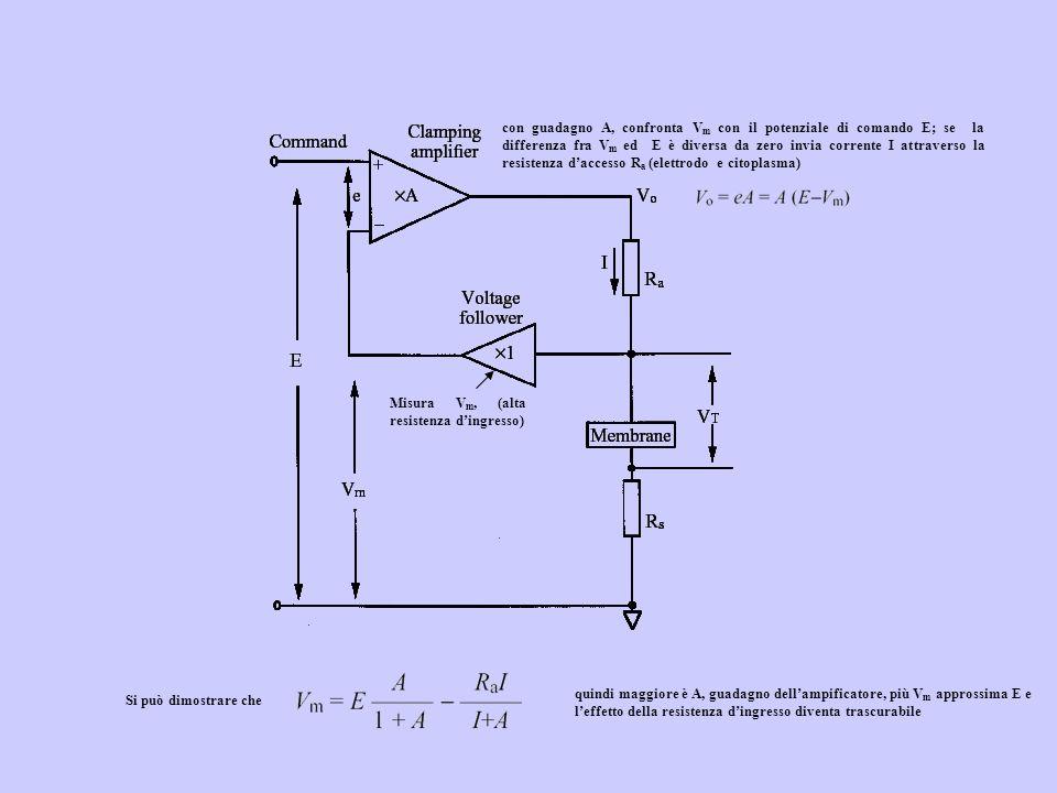 con guadagno A, confronta Vm con il potenziale di comando E; se la differenza fra Vm ed E è diversa da zero invia corrente I attraverso la resistenza d'accesso Ra (elettrodo e citoplasma)