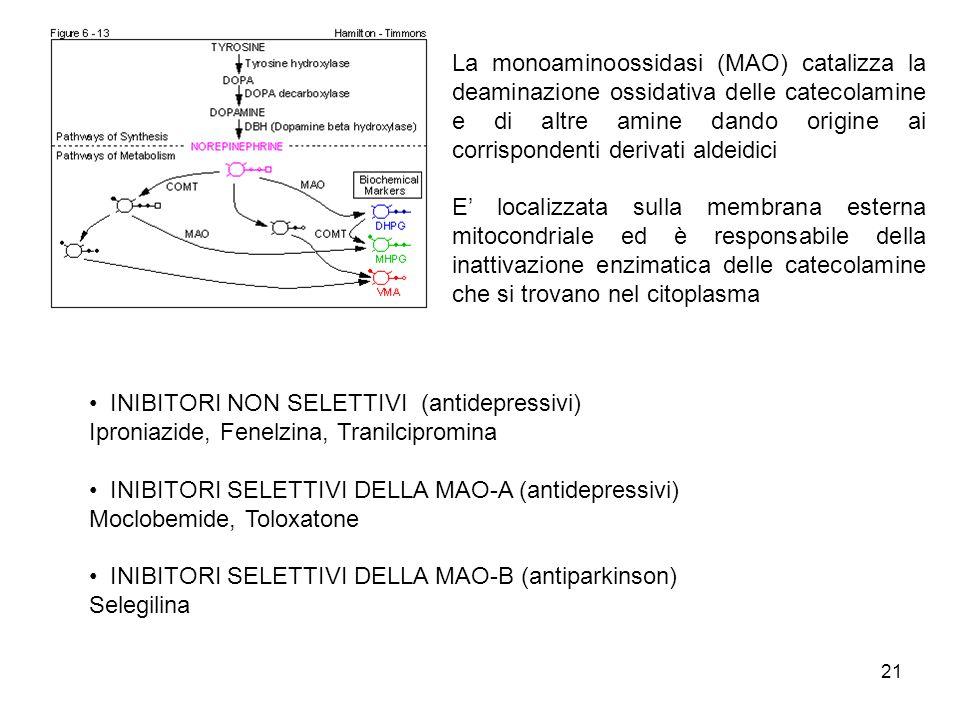 La monoaminoossidasi (MAO) catalizza la deaminazione ossidativa delle catecolamine e di altre amine dando origine ai corrispondenti derivati aldeidici