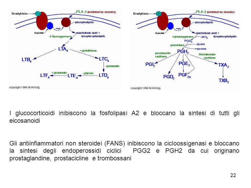 I glucocorticoidi inibiscono la fosfolipasi A2 e bloccano la sintesi di tutti gli eicosanoidi