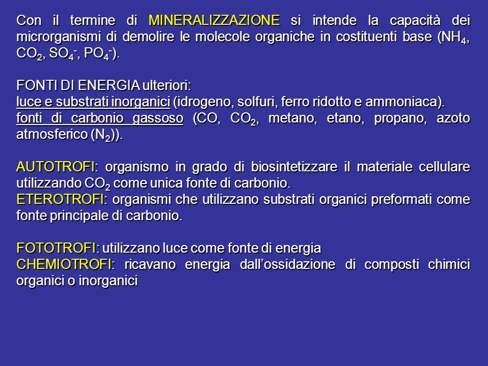 Con il termine di MINERALIZZAZIONE si intende la capacità dei microrganismi di demolire le molecole organiche in costituenti base (NH4, CO2, SO4-, PO4-).