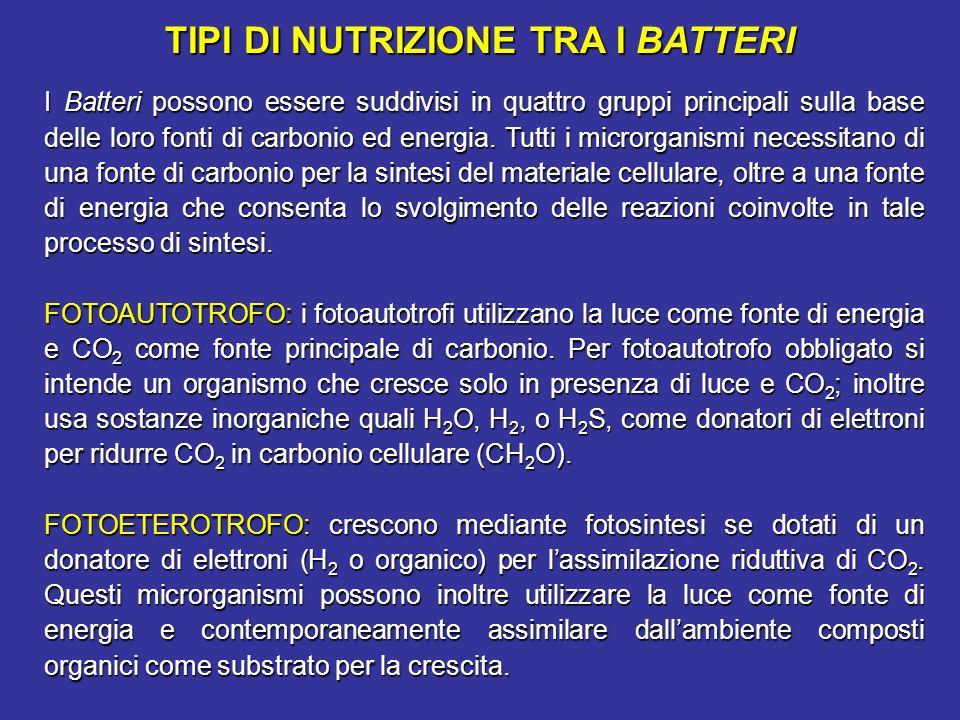 TIPI DI NUTRIZIONE TRA I BATTERI