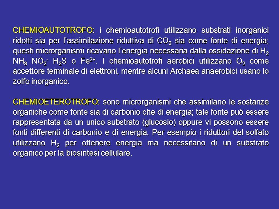 CHEMIOAUTOTROFO: i chemioautotrofi utilizzano substrati inorganici ridotti sia per l'assimilazione riduttiva di CO2 sia come fonte di energia; questi microrganismi ricavano l'energia necessaria dalla ossidazione di H2 NH3 NO2- H2S o Fe2+. I chemioautotrofi aerobici utilizzano O2 come accettore terminale di elettroni, mentre alcuni Archaea anaerobici usano lo zolfo inorganico.