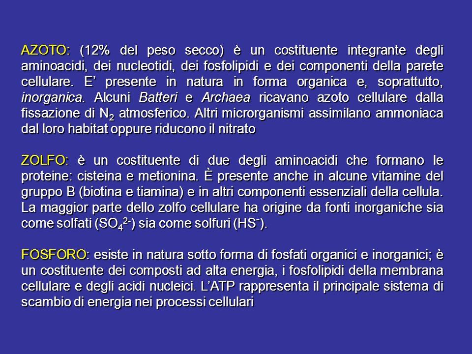 AZOTO: (12% del peso secco) è un costituente integrante degli aminoacidi, dei nucleotidi, dei fosfolipidi e dei componenti della parete cellulare. E' presente in natura in forma organica e, soprattutto, inorganica. Alcuni Batteri e Archaea ricavano azoto cellulare dalla fissazione di N2 atmosferico. Altri microrganismi assimilano ammoniaca dal loro habitat oppure riducono il nitrato