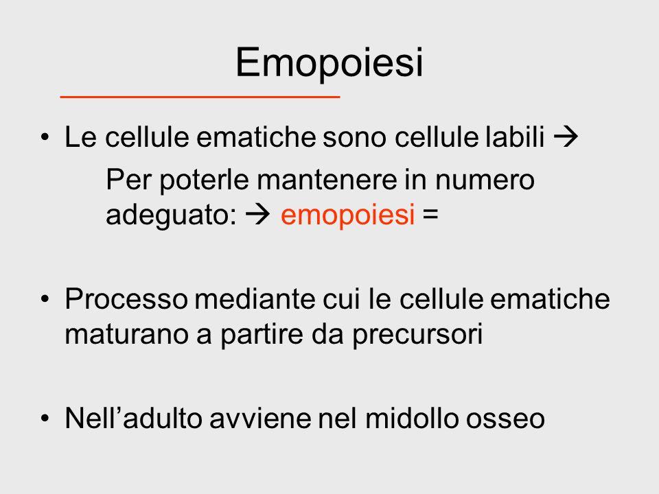 Emopoiesi Le cellule ematiche sono cellule labili 