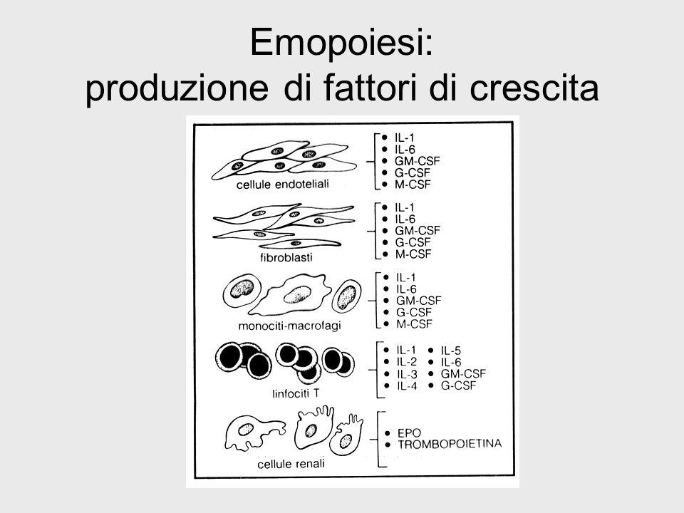 Emopoiesi: produzione di fattori di crescita