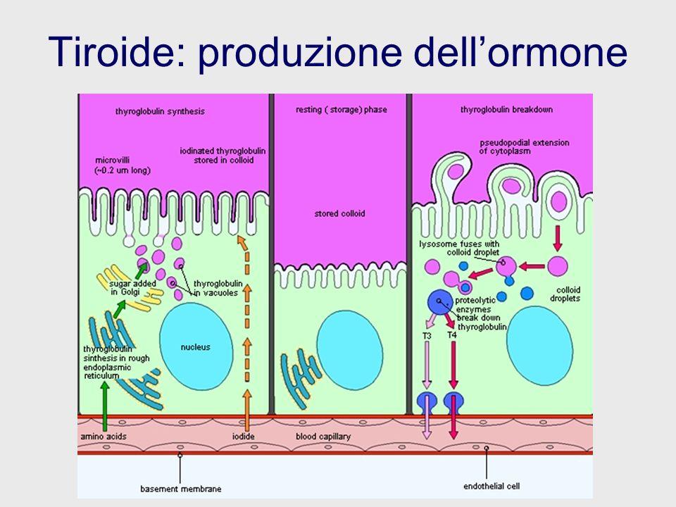 Tiroide: produzione dell'ormone