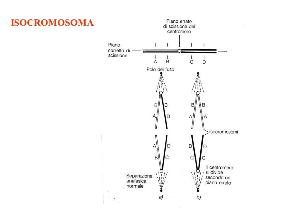 ISOCROMOSOMA