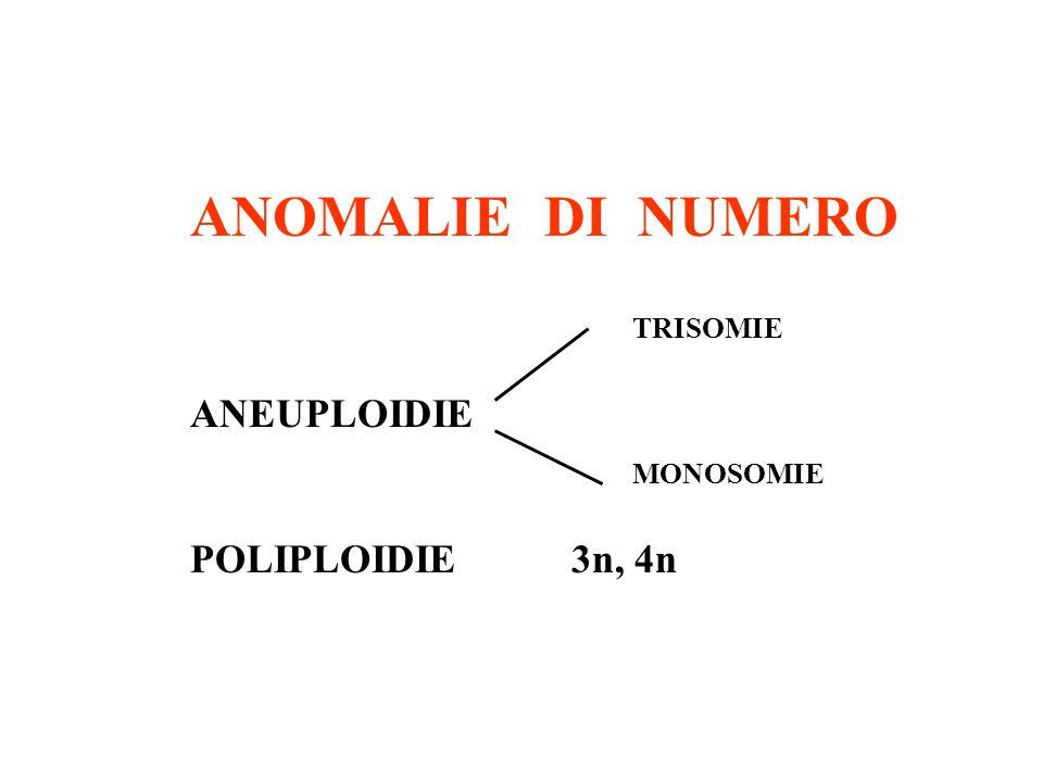 ANOMALIE DI NUMERO ANEUPLOIDIE POLIPLOIDIE 3n, 4n TRISOMIE MONOSOMIE