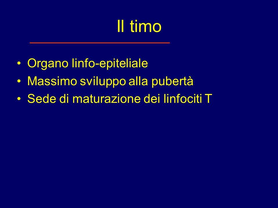 Il timo Organo linfo-epiteliale Massimo sviluppo alla pubertà