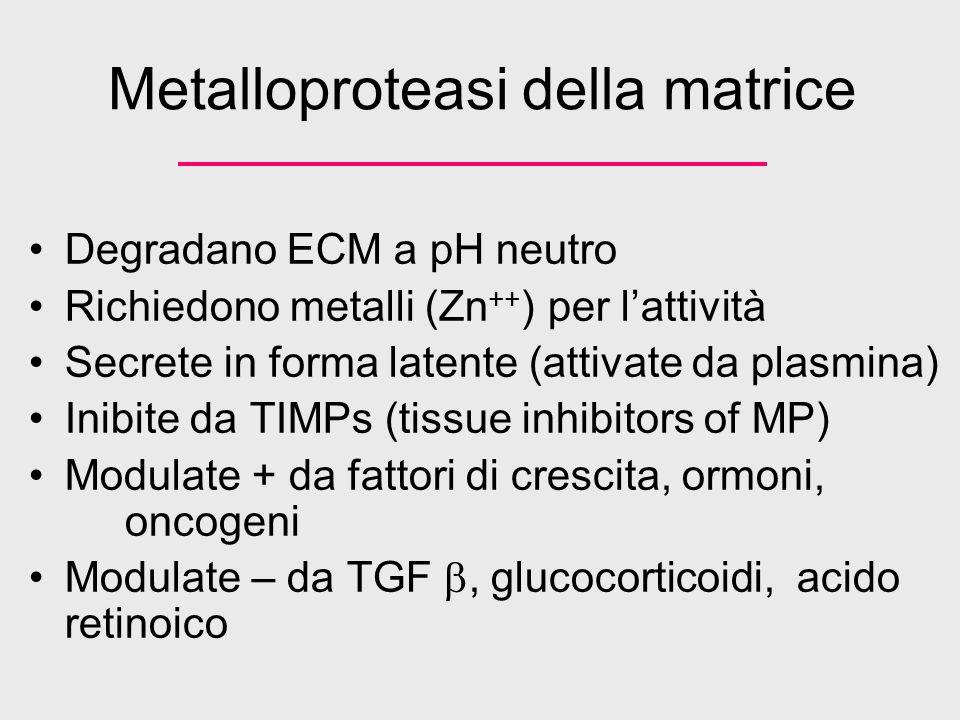 Metalloproteasi della matrice