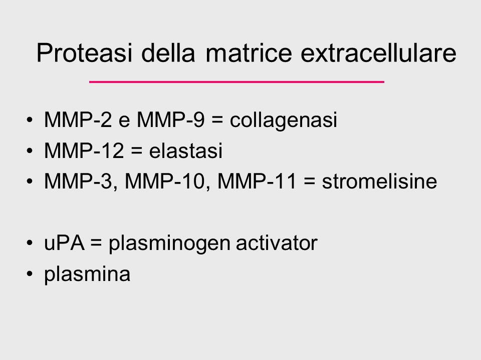 Proteasi della matrice extracellulare