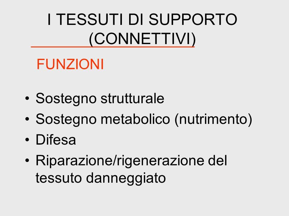 I TESSUTI DI SUPPORTO (CONNETTIVI)