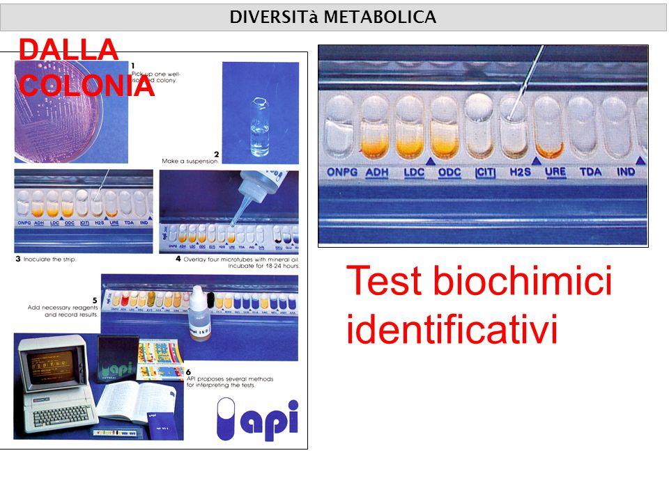 Test biochimici identificativi