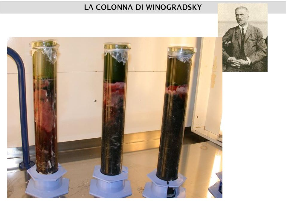 LA COLONNA DI WINOGRADSKY