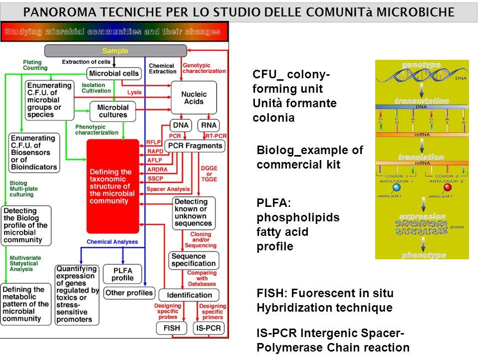 PANOROMA TECNICHE PER LO STUDIO DELLE COMUNITà MICROBICHE