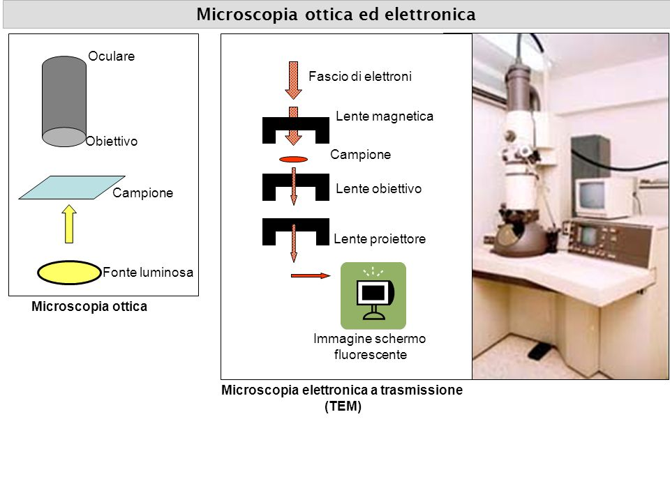 Microscopia ottica ed elettronica