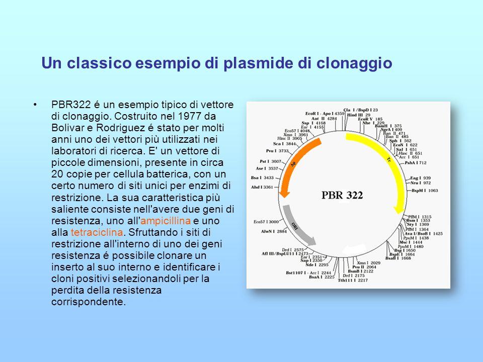 Un classico esempio di plasmide di clonaggio