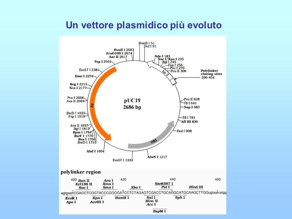 Un vettore plasmidico più evoluto