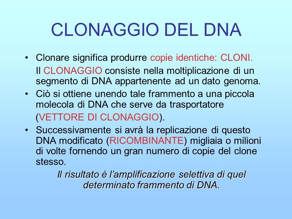 CLONAGGIO DEL DNA Clonare significa produrre copie identiche: CLONI.