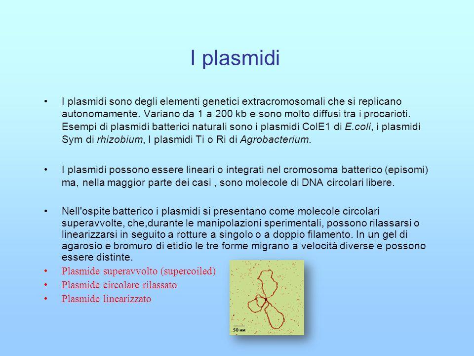 I plasmidi
