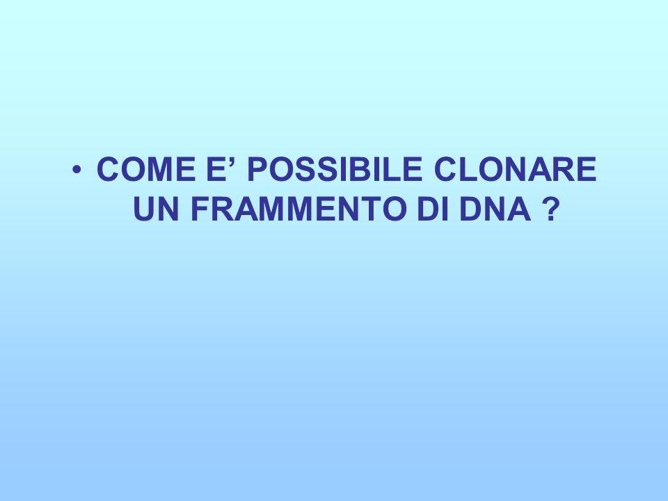 COME E' POSSIBILE CLONARE UN FRAMMENTO DI DNA
